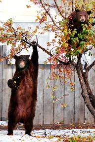 Beary Happy